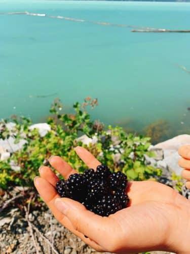 強い抗酸化作用を持つ、美容と健康の強い味方!ブラックベリーに秘められた栄養価って?